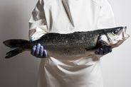 Aquanaria: La lubina de la alta gastronomía