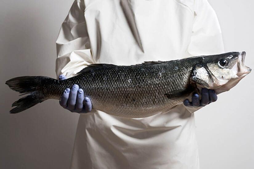 Aquanaria: Haute cuisine's favourite sea bass