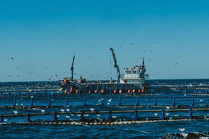 Piscinas para engorde de atún Balfegó