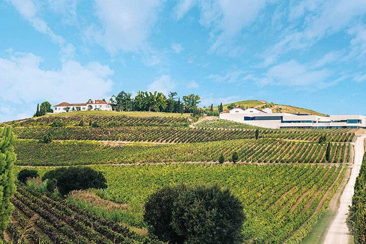 Winery Casa Santos Lima. Lisbon