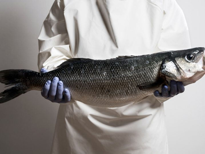Aquanaria sea bass