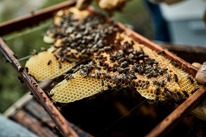Honeycomb. Formentera